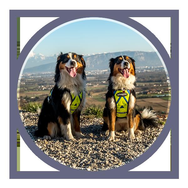 2 chiens à votre service pour rechercher les punaises de lit dans le Pays de Gex et toute la région Rhône-Alpes