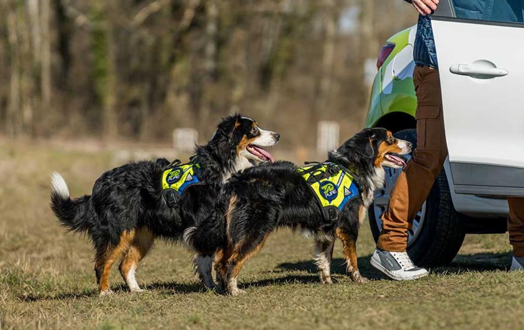 détection canine de punaises